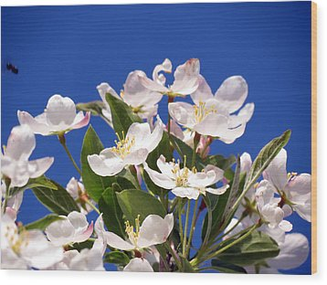 Wood Print featuring the photograph Spring Blossoms by Darleen Stry