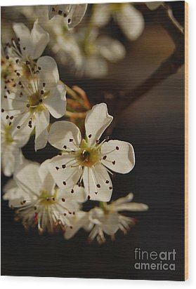 Spring Blossoms I Wood Print