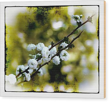 Spring Bough Wood Print by Judi Bagwell