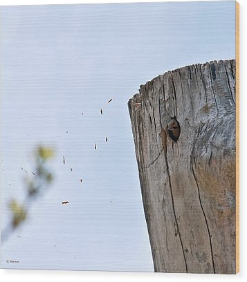 Wood Print featuring the photograph Spring Cleaning by Edward Peterson
