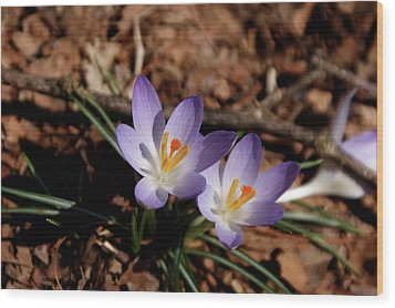 Wood Print featuring the photograph Spring Crocus by Paul Mashburn