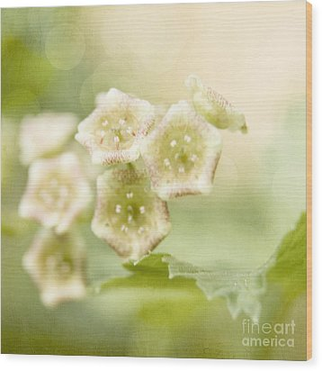 Spring Currant Blossom Wood Print