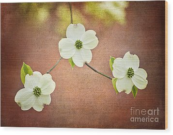 Wood Print featuring the photograph Spring Dogwood Blooms by Cheryl Davis