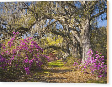 Spring Flowers Charleston Sc Azalea Blooms Deep South Landscape Photography Wood Print by Dave Allen
