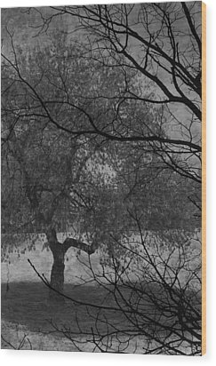 Spring For Leaves  Wood Print by Jerry Cordeiro