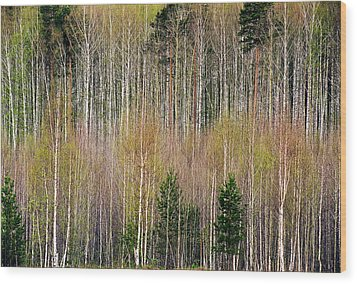Spring Forest Lace Wood Print by Vladimir Kholostykh