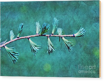 Spring Has Sprung Wood Print by Aimelle