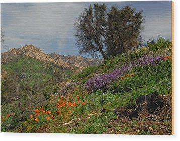 Spring In Santa Barbara Wood Print by Lynn Bauer