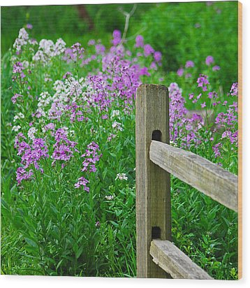 Spring Phlox 6074 Wood Print by Michael Peychich