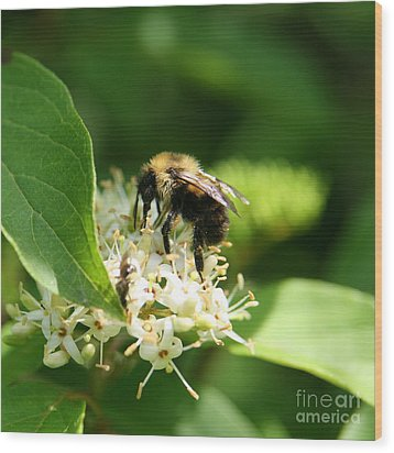 Spring Pollination Wood Print by Neal Eslinger