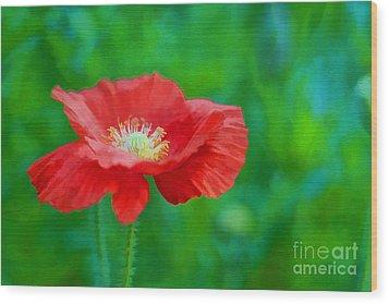 Spring Poppy Wood Print by Darren Fisher