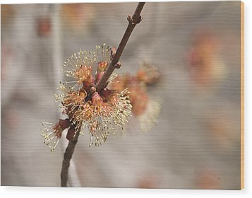 Spring Tree Bud Wood Print