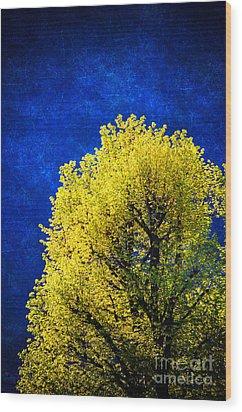 Spring Tree Wood Print by Silvia Ganora