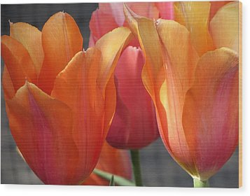 Spring Tulips Wood Print by Rebecca Overton