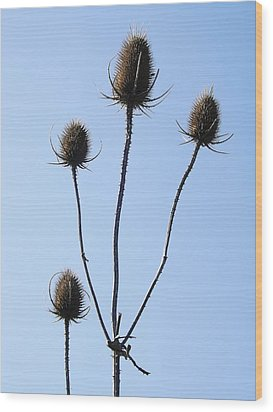 Wood Print featuring the photograph Spring Weeds 1 by Gerald Strine
