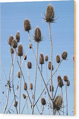 Wood Print featuring the photograph Spring Weeds 2 by Gerald Strine