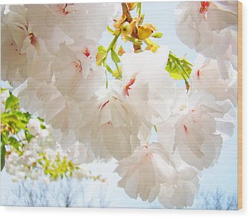 Spring White Pink Tree Flower Blossoms Wood Print by Baslee Troutman