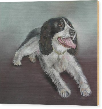 Springer Spaniel Wood Print by Ceci Watson