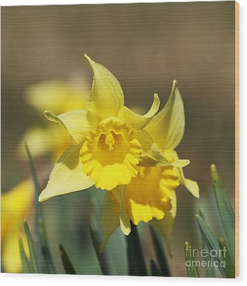 Wood Print featuring the photograph Springing Spring by Julie Clements