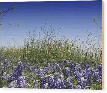 Wood Print featuring the photograph Springtime Bluebonnets by Lynnette Johns