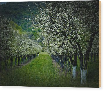 Springtime In The Orchard II Wood Print by Bill Gallagher