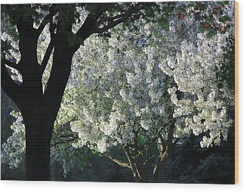 Springtime In Wisconsin Wood Print by James Hammen