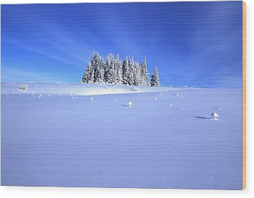 Spruce Grove In Winter Wood Print by Michele Cornelius
