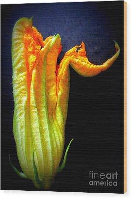 Squash Blossom Wood Print by Maria Scarfone