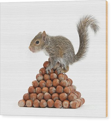 Squirrel And Nut Pyramid Wood Print by Mark Taylor