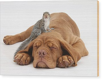 Squirrel And Puppy Wood Print by Mark Taylor