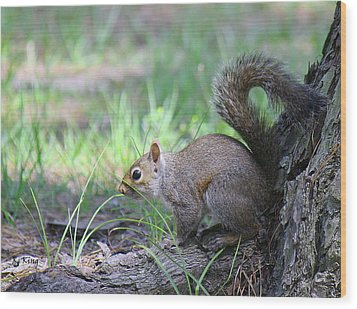 Wood Print featuring the photograph Squirrel Hiding In The Grass by Roena King
