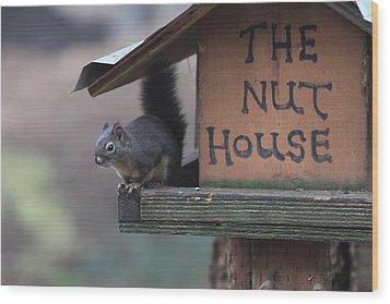 Squirrel In The Nut House Wood Print by Sam Amato