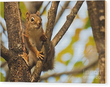 Squirrel On High Wood Print by Cheryl Baxter