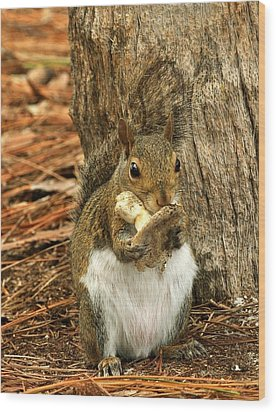 Squirrel On Shrooms Wood Print