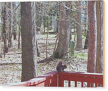 Wood Print featuring the photograph Squirrel Waiting by Pamela Hyde Wilson