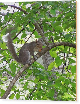 Wood Print featuring the photograph Squirrel With Candy by Renee Trenholm