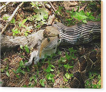 Wood Print featuring the photograph Squirrel's End by Doug McPherson