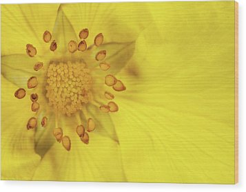 Stamen Wood Print by Billy Currie Photography