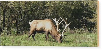 Stand Alone Elk Wood Print by The Kepharts