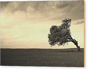Stand Alone Tree 1 Wood Print by Sumit Mehndiratta