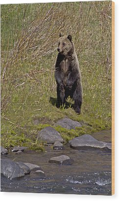 Wood Print featuring the photograph Standing Grizzly by J L Woody Wooden