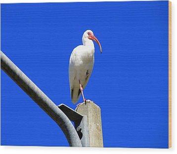 Standing Ibis Wood Print