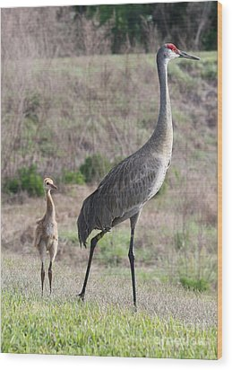 Standing Tall Wood Print by Carol Groenen