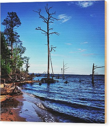 Standing Tall Goose Creek State Park Wood Print