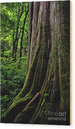 Stanley Park Trees 1 Wood Print by Terry Elniski