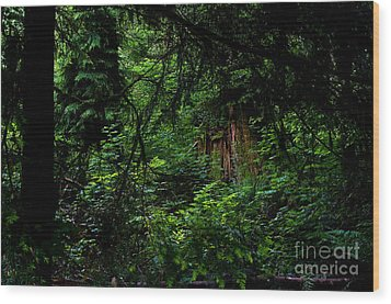 Stanley Park Trees 3 Wood Print by Terry Elniski