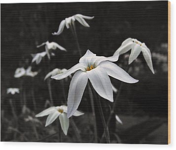 Wood Print featuring the photograph Star Flowers by Deborah Smith