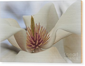 Star Magnolia Wood Print by Benanne Stiens
