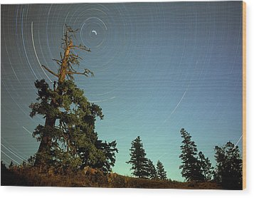 Star Trails, North Star And Old Douglas Wood Print by David Nunuk