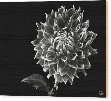 Wood Print featuring the photograph Starburst Dahlia In Black And White by Endre Balogh